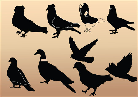 pigeons collection - vector Vector