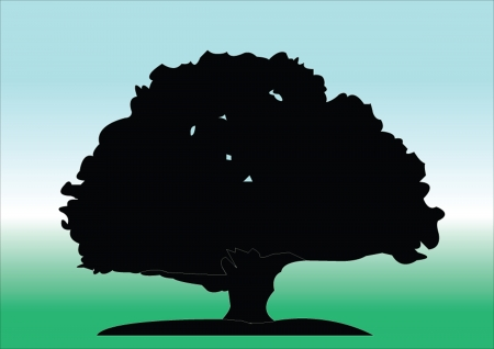 oak tree - vector