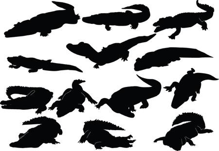 crocodile collection - vector Vector
