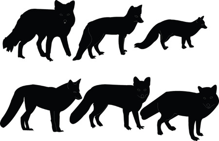 foxes illustration collection - vector Vector