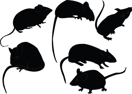 rodent:  mouse collection  Illustration