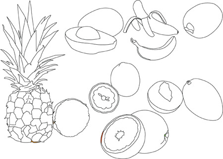 citrus fruits collection Stock Vector - 6929282