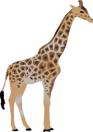 desert: giraffe illustration  Illustration