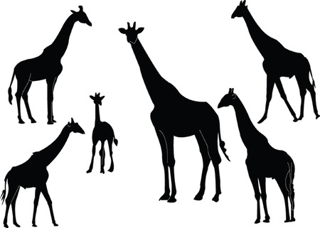 giraffe collection Vector