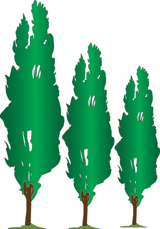 poplar: three poplars