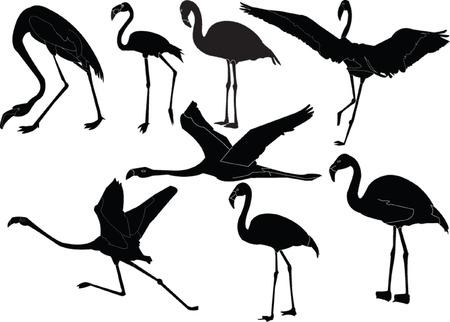 flamingo collection Vector