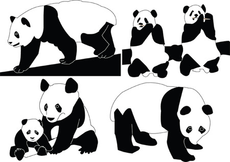 panda bear: panda collection