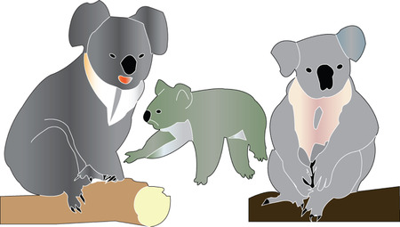 three koalas Vector