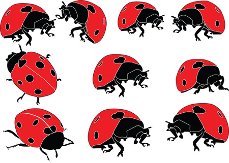 ladybird collection  Stock Vector - 7689014