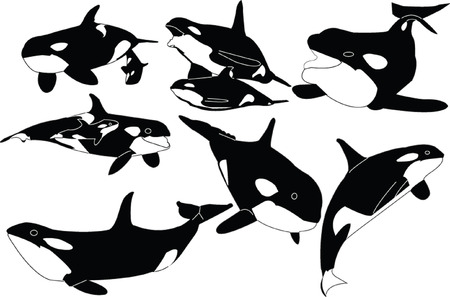 whales orca collection  Vector