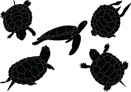 turtles collection  Vector