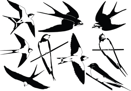flock of birds: swallows collection - vector