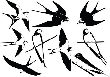 ornithology: swallows collection - vector