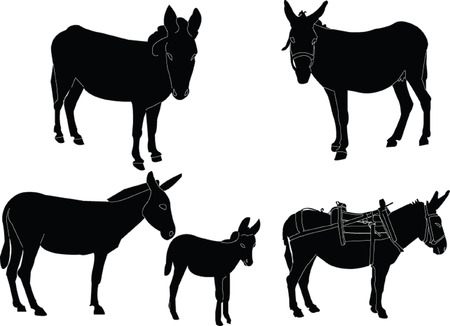 donkey collection Stock Vector - 7689026