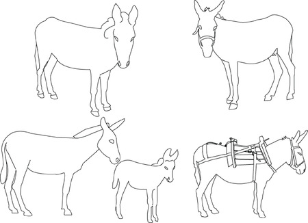 donkey tail: colecci�n de burro  Vectores