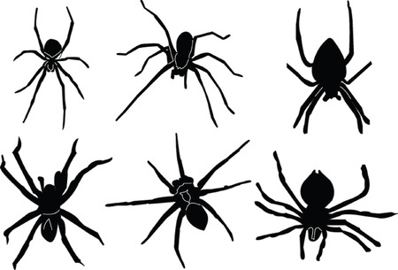 crawlies: spiders silhouette