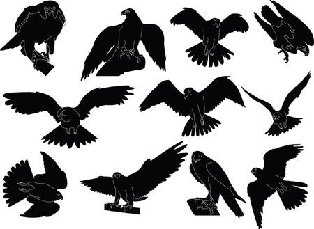 falcon: falcon collection