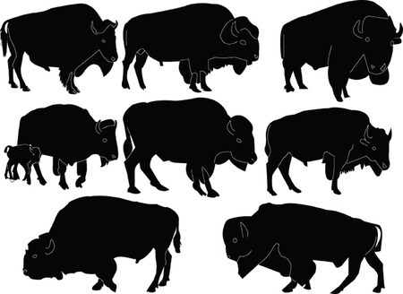 bisons collection