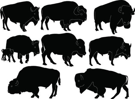 bison: bisons collection  Illustration