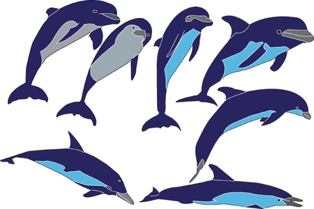 dolphins illustration collection