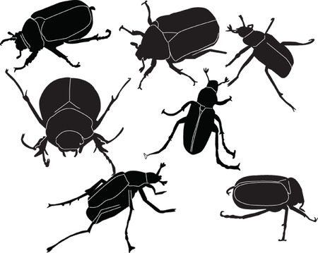 chafers illustration collection