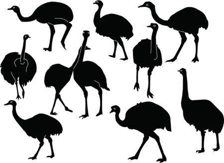 emu: colecci�n de Nandu