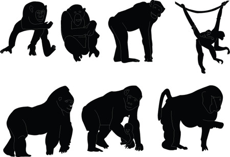 primates: monkey silhouette collection - vector