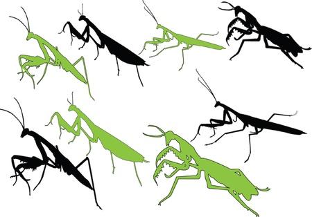 devotee bug silhouette - vector Vector