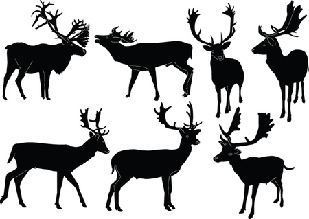 fallow deer collection - vector
