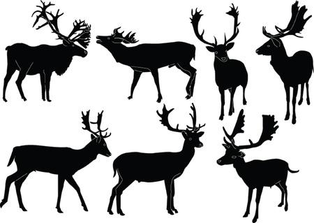 fallow deer collection - vector