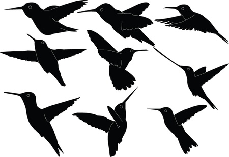 humming bird collection - vector Stock Vector - 9274365