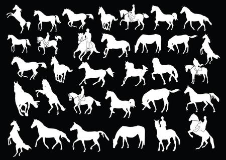 horseman: cavalli collection - vector Vettoriali