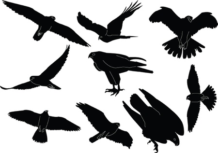 falcon wings: falcons collection silhouette - vector