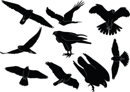 valken collectie silhouette - vector Vector Illustratie