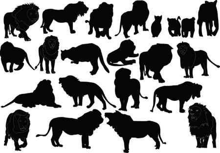 lions big collection - vector