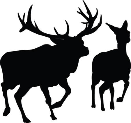 white tail deer: deers family - vector Illustration