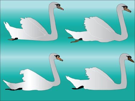 white swan collection - vector Stock Vector - 12989503