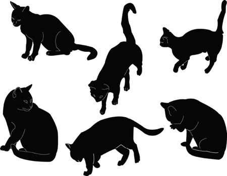 cat collection - vector Stock Vector - 12989497