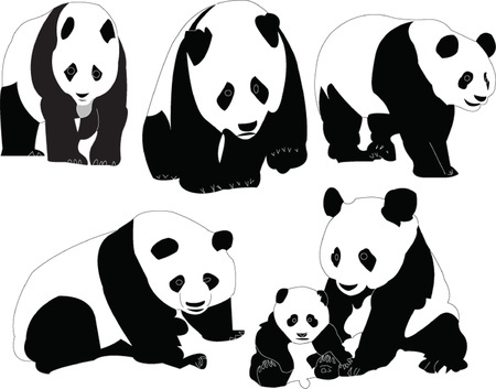 panda collection - vector