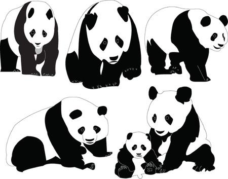 panda collection - vector