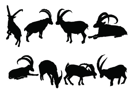 rock goats collection - vector Illustration