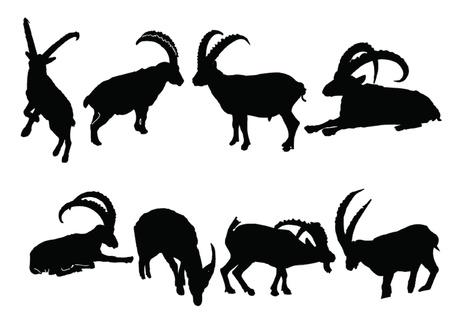an ungulate: stambecchi collection - vector Vettoriali