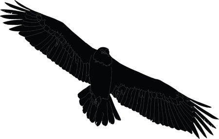signmaking: buitre leonado en vuelo