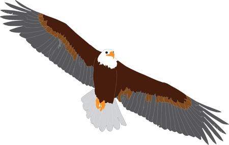 griffon vulture in flight - vector