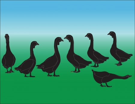 gooses illusration collection Stock Vector - 15360655