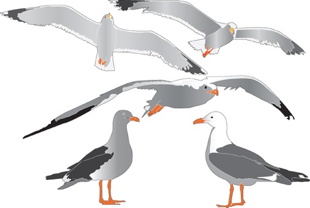 feathered: sea gull collection