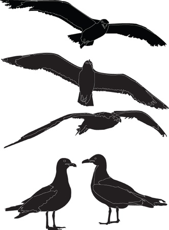 sea gull collection Vector