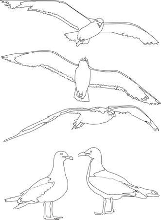 gaviota: gaviota colección