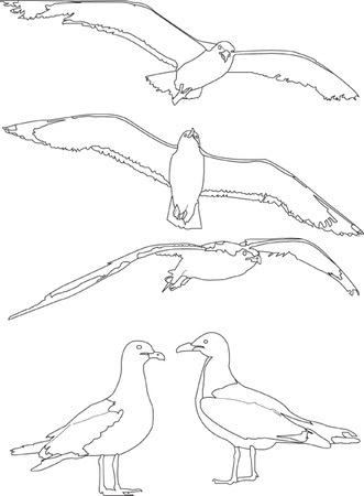 gulls: sea gull collection