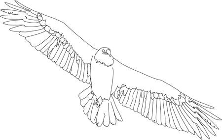 griffon: griffon vulture in flight Illustration